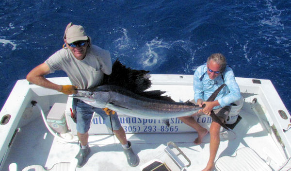 beautiful sailfish caught and released